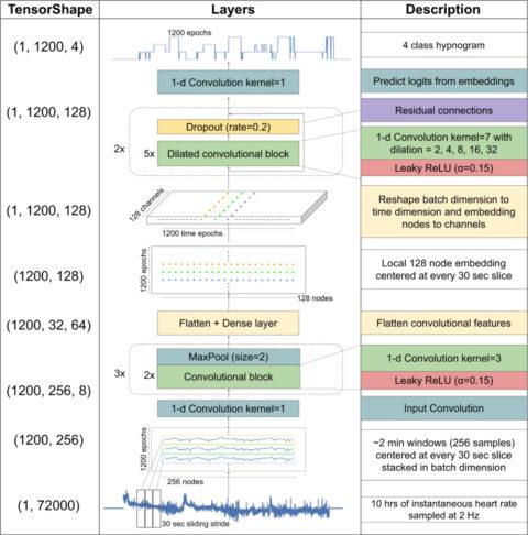 心電図(ECG)による心拍数のサンプリングを使用したディープラーニングによる睡眠ステージング